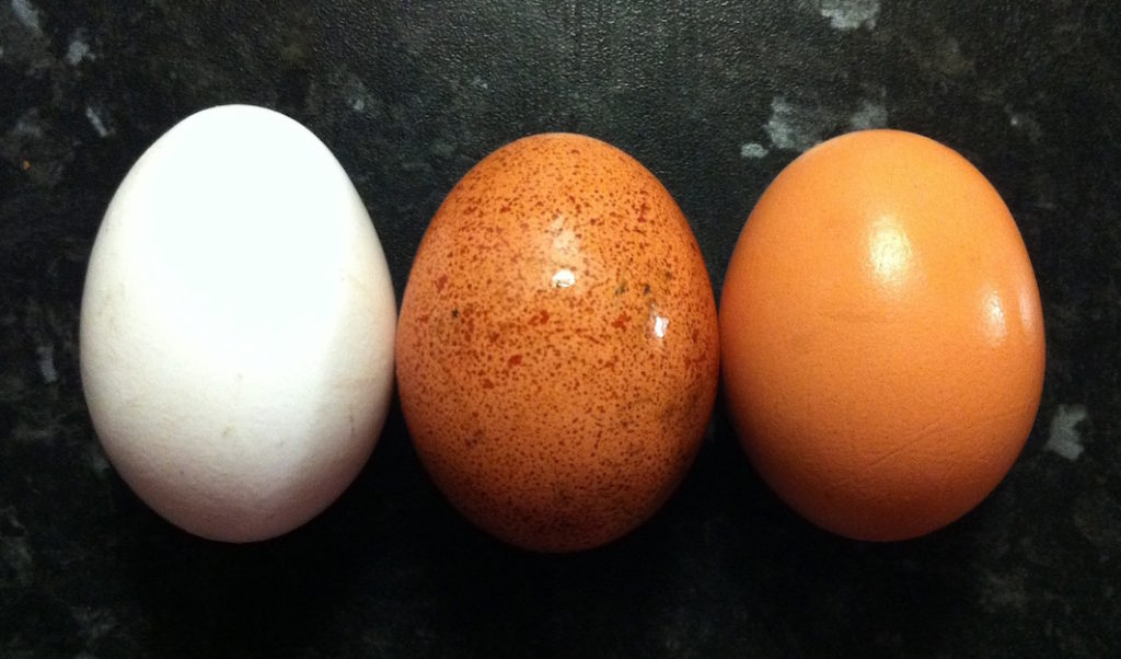 Egg_colours